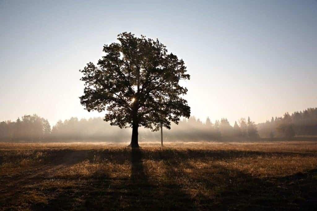 tree retirement